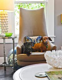 Dapper dachshunds Pixel and Noodle share a Jonathan Adler chair.