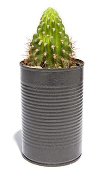 Potted cactus, $10, Second Chance Recycled & Repurposed Home Décor at Indie Genius