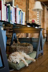 Murphy, a rescued terrier mix, takes respite under Janet's desk, custom-made by GL Construction, which also crafted the kitchen's built-in cabinetry.