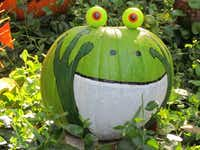 Come see pumpkins painted as birds, mammals, reptiles, amphibians -- like this frog -- and more at the Fort Worth Zoo's Halloween celebration Oct. 25-27.