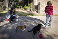 Selah Ragland and her brother, Judah, played with their new puppies Luna (left) and Hunter outside their home on Christmas Eve. The children's father, Dallas Morning News columnist James Ragland, purchased the puppies as a Christmas gift after the family lost some of their dogs this year. (2015 File Photo/G.J. McCarthy)