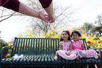 Amy Davis photographs Sophia Davis, 4, left, and Chloe Davis, 6, while wearing their Easter like dresses along The Paseo during the Dallas Blooms floral festival, on Wednesday, March 19, 2014 at the Dallas Arboretum in Dallas.Ben Torres - Special Contributor