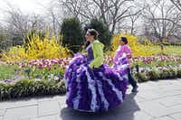 Samantha Robles walks along The Paseo walkway wearing her quincenera dress with the help of Elsa Robles, on their way to the young lady's portrait session, during the Dallas Blooms floral festival, on Wednesday, March 19, 2014 at the Dallas Arboretum in Dallas. Ben Torres/Special ContributorBen Torres - Special Contributor