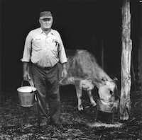 Philip Montgomery photographed  Henry Schmidt with the family's milk cow as part of his project chronicling descendants of German immigrants in the Fredericksburg area in the 1970s.Photos © Philip O'Bryan Montgomery III