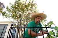 Daniel Bell tends to his grape vines.Rose Baca  -  neighborsgo staff photographer