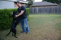 Former Marine Robert Hulsey introduces Jjoe, a retired U.S. Marine Corps Improvised Detection Dog, to his backyard in Garland after picking the dog up at Dallas Love Field Airport on Sept. 9, 2014. In 2011, Hulsey and Jjoe worked side-by-side detecting explosives and patrolling in Marja, Afghanistan. Hulsey is now Jjoe's official owner, through the help of Mission K-9 Rescue, a nonprofit organization that provides monetary, transportation, adoption and professional assistance for the retirement of military dogs, and the American Humane Association. (Rose Baca/Neighborsgo Staff Photographer)(Rose Baca)