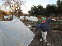 Members have been working on ways that will protect the garden from freezing temperatures., including using hoops for covering plants with frost cloth. That helps keep plants from freezing during the cold snaps and increases production.