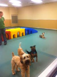 The smaller dogs' indoor play area at Pooch Hotel Richardson.(Maelyn Schramm)