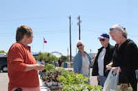 The Coppell Farmers Market started in Old Town Coppell, the historic district of the city, in the summer of 2003.