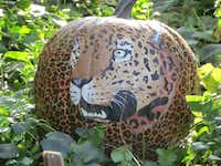 Come see pumpkins painted as birds, mammals -- like this jaguar -- reptiles, amphibians and more at the Fort Worth Zoo's Halloween celebration Oct. 25-27.