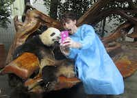 Gaba takes a photo with a panda at the Chengdu Research Base of Giant Panda Breeding in China.Photo submitted by JAKE GABA