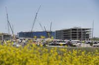 Construction is coming along on Toyota's North American headquarters in Plano.( Andy Jacobsohn  -  Staff Photographer )