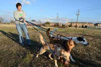 <bold>Tracy Allard's dogs</bold> (from left), Ginger, Gracie and Dingo, are ready to run free on the proposed site of a Coppell dog park, an effort that Allard has been heading up.(ROSE BACA)