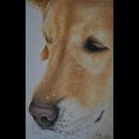 """""""Snow Dog"""" by Lisa MillsColored Pencil Society of America"""