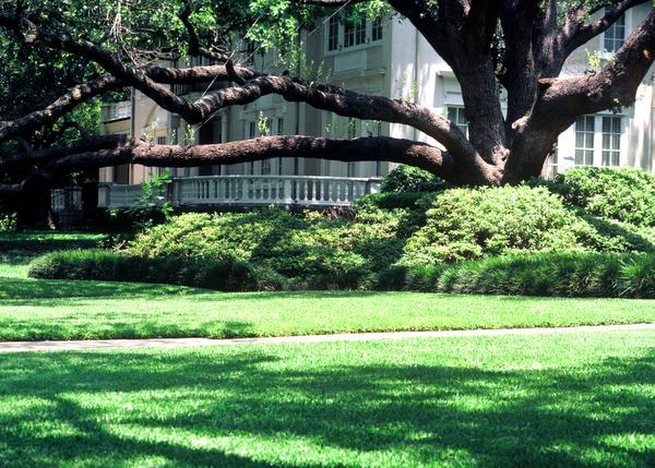 7 arbustos que crecen a la sombra | Bayer Avanzado