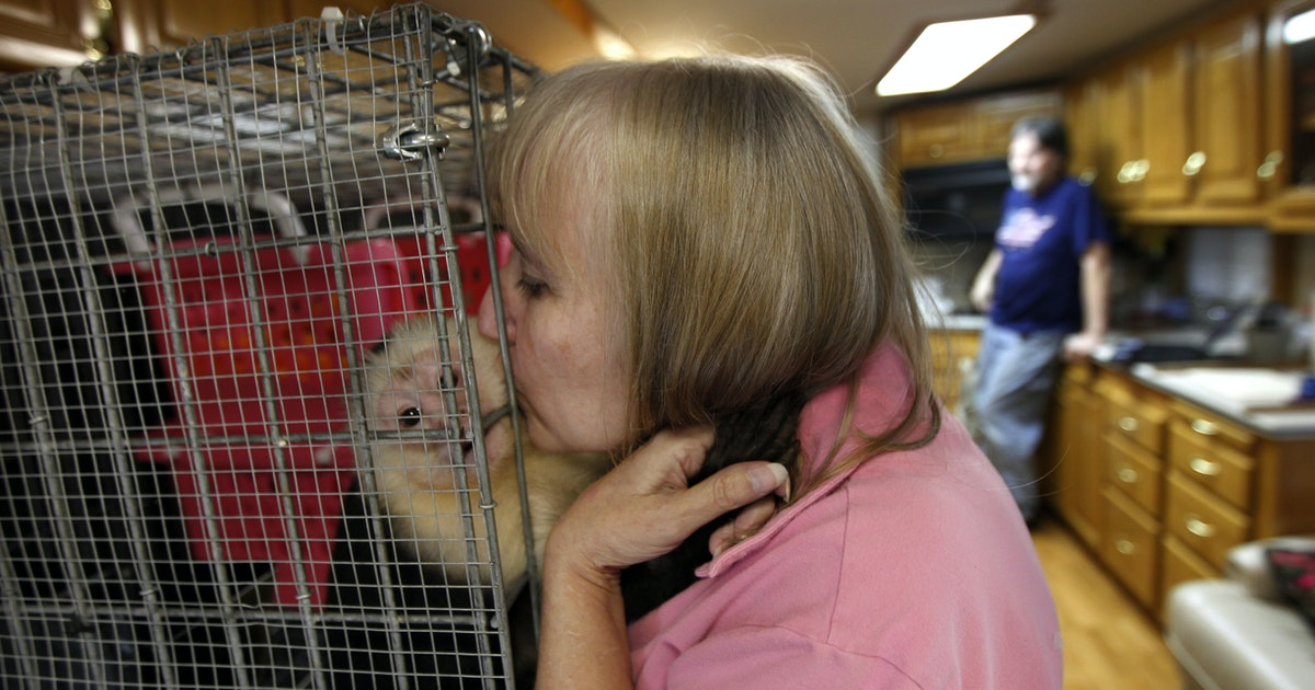 Louisiana monkey owners hide out in Texas to avoid exotic animal