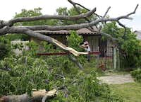 Linda Mitchell saws limbs off of one of two trees that fell into her yard from a neighboring property in West Dallas. She said her power was still out on Friday.David Woo  -  Staff Photographer
