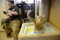 Murphy animal control officer Terra Dominguez takes adoptive kittens out to be photographed and placed on Petfinder.com at the current, 800-square-foot animal shelter.(Rose Baca - neighborsgo staff photographer)