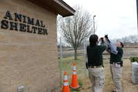 Murphy animal control officers Tammy Drake (left) and Terra Dominguez take a photo of a kitten outside the city's 800-square-foot animal shelter in Murphy. Work has begun on the city of Murphy's new animal shelter, which will be much larger at 2,080 square feet.(Rose Baca - neighborsgo staff photographer)