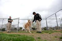Murphy animal control officers Tammy Drake (right) and Terra Dominguez let an adoption dog play in the outdoor pen area at the city's 800-square-foot animal shelter in Murphy. Work has begun on the city of Murphy's new animal shelter, which will be much larger at 2,080 square feet.(Rose Baca - neighborsgo staff photographer)