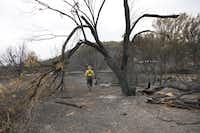 Greg Creacy, regional fire management and natural resources coordinator for Texas Parks and Wildlife, walks around debris at Possum Kingdom State Park. Over 90 percent of the park was scorched by wildfires.