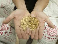 Wim Bens, president and head brewer of Lakewood Brewing Co., displays a handful of the malt barley his company is using to produce Lakewood Lager.