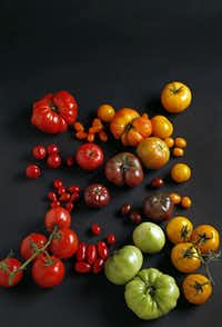 There's no shortage of fresh tomatoes this season — and there are plenty of ways to make the most of the season's best.(Photos by Vernon Bryant - Staff Photographer)