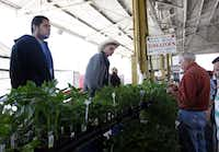 J.T. Lemley of Lemley's Farm, center top, assists customer Jerry Donoho, right, of Lancaster select tomato plants at the Lemley's Farm stand at the City of Dallas Farmers Market on North Pearl Street in Dallas on April 6, 2013.(Sonya Hebert-Schwartz - Staff Photographer)