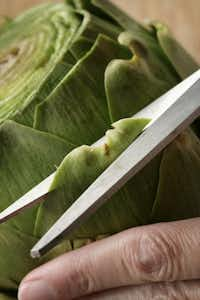 Prepping an artichoke. 4. A kitchen shears can help trim the pointy tips.