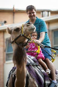 Mark Haft enjoys a camel ride during the first Zoo Tunes at the Dallas Zoo on Saturday, August 11. His daughter, Ashley Haft, peeks curiously at the animal.
