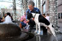 Daniel Tanbein lets his furry friend Ahshun get a drink from the fountain during the annual Spring Block Party in the Dallas Arts District on Friday.(Alexandra Olivia - Special Contributor)