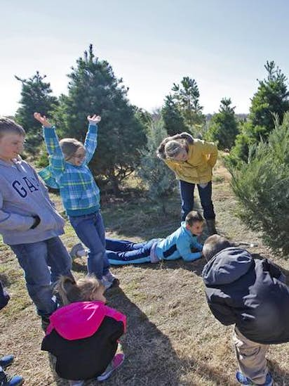 christmas tree farms owned by siblings are an annual attraction for families rockwall dallas news