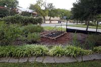 Stefanowicz also has made a small raised bed on a plot of land behind his apartment.( Lara Solt  -  Staff Photographer )