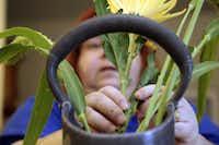 Ikebana International Dallas Chapter 13 member Sharman Palmer arrange flowers Tuesday September 4,2012 in preparation of a traditional Japanese festival celebrating autumn.