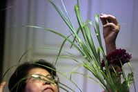 Ikebana International Dallas Chapter 13 member Tamiko Hiramineu puts a finishing touch on her arrangement Tuesday September 4, 2012 as the chapter prepares of a traditional Japanese festival celebrating autumn.