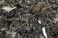 A detail of compost on its way to becoming black and crumbly at Plano Environmental Education Center in Plano.