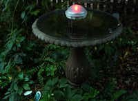 The battery-powered water wiggler lights up at dusk and changes colors for about three hours.