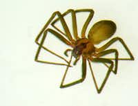 Brown recluse spider in resting position