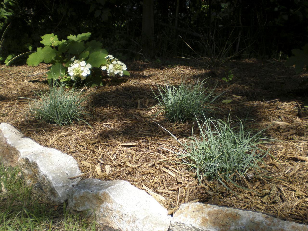 Arbustos de hoja perenne de rápido crecimiento que son resistentes a la sombra | Inicio Guías | Puerta SF