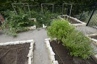 O'Riordan raises seasonal vegetables in the backyard.