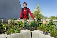 Master gardener Annette Beadles, an eco-botany instructor at Independence Life Preparatory School in Dallas, helped her students build a keyhole garden at the Master Gardener Demonstration Garden. They used salvaged materials.( Evans Caglage  -  Staff Photographer )