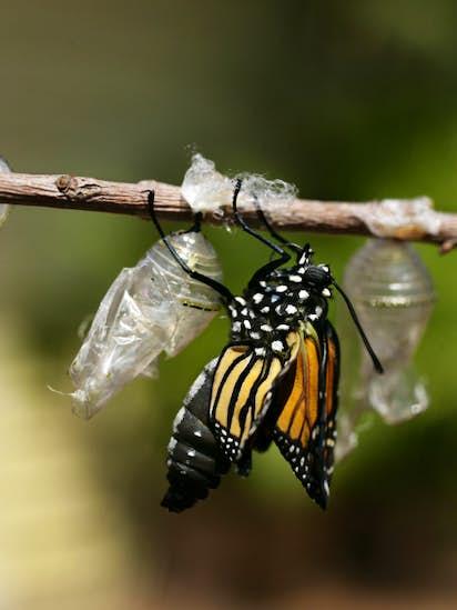 3cb8b186acb Dallas man raises butterflies for local florists | Gardening ...