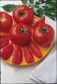 'Early Girl' tomato offers a relatively short time to maturity of 65 days.W. Atlee Burpee  - W. Atlee Burpee