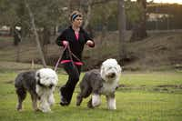 Mary Campise ran recently at Reverchon Park in Dallas with her dogs Blue and Marley. Campise had a scare last year when she suffered a blood clot and had to have surgery.