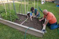 Kristen Shear, center, her husband Mark Shear, right and daughter Savena, 5, tend to their small backyard garden in Richardson.