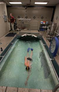 Ben Lecomte of Grand Prairie practices in the swimming treadmill at the Institute for Exercise and Environmental Medicine in Dallas. Lecomte is the first man to successfully swim across the Atlantic Ocean, and is planning a five-month journey to swim across the Pacific Ocean in coming months. He uses the swimming treadmill to train, because it mimics swimming in the open water.