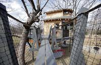 The rope bridge outside a treehouse built by Pete Nelson for Bobby and Marty Page in Malakoff, Texas, on Friday, March 14, 2014. Nelson is part of the Animal Planet's television show Treehouse Masters.Vernon Bryant  -  Staff Photographer