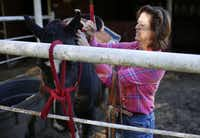 Amber Parker attaches a bridle to her horse, Cherokee, at her home in Ovilla. Riding keeps her core strong, and she also does yoga for balance.