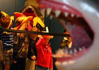 "Jaws wide open: Jared Ashford, 4, (center) and his classmates got a sneak peek Thursday at the ""Planet Shark"" exhibit at the Museum of Nature & Science in Fair Park."