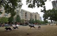 Dogs run around at Mutts Canine Cantina, a business that's become a neighborhood green space in Uptown. But Mutts won't be around for the long term. It has a temporary lease; the land is zoned for high-rises. As the construction boom continues, city officials and urban planners say Dallas must strike a better balance between buildings and open space.( Nathan Hunsinger  - Staff Photographer)